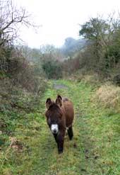 donkey-home